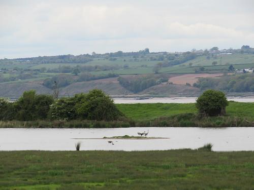 Slimbridge: WWT Slimbridge, Zeiss hide (Gloucestershire)