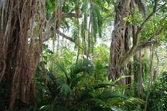 Djungel (rckem) Tags: miami djungel wald baum bäume trees vizcaya gardens florida
