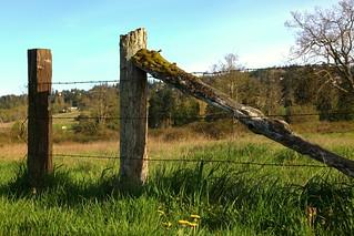 Former Farm Fence