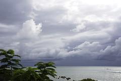 ...over the sea... (@petra) Tags: seascape scenery autumnal autumn 2017 backtomyfavoritespot nature natural ocean atlantic tree flamboyant leaves clouds stormcomingup
