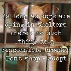 BREEDER (dflmanagement) Tags: dog rescue cat animal pet shelter adopt breeder