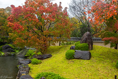 IMG_1656 (Evgeny Gorodetskiy) Tags: himeji maple foliage asia momiji leaves outdoor autumn rain japan park himejishi hyōgoken япония jp