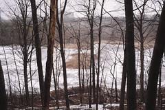 IMG_5903 (giltay) Tags: rexagon28mmf28 marsh etsetonpark osc ontariosciencecentre trees