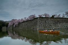 Himeji, douve et sakura en fleurs (patrick Thiaudiere, thanks for 1 million views) Tags: japon japan voyage cerisier cerisiers cherry sakura fleur fleurs blossom floraison avril