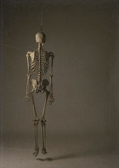 Hanging skeleton (Harry Potts) Tags: hanging skeleton bones