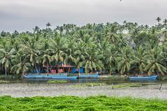 Idyllic (gecko47) Tags: house home waterfront lagoon blue moorings boats canoes vegetation palms coconuts green kovalam kerala trivandrum thiruvananthapuram samudrabeach india