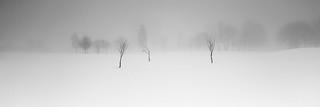 dancing in the mist