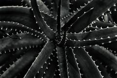 Dark Flora 2