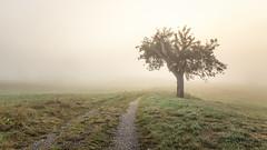 Misty Tree (Sebo23) Tags: mist nebel fog tree baum moody lichtstimmung landscape landschaft canon6d canon24704l