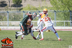 LMFA '16-17 - Jabatos 38 - Osos de Madrid 39