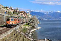Interegio Cargo by francoispobez - Une RE 420 Interegio sur un train de marchandise pour Lausanne passe St Saphorin au bord du Lac Léman.