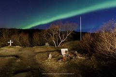 Night at the national park (Kjartan Guðmundur) Tags: iceland ísland auroraborealis northernlights norðurljós nocturne ngc nightscape cementery trees stars sky canoneos5dmarkiv tokinaatx1628mmf28profx kjartanguðmundur arctic photoguide tourguide