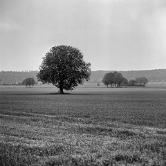 Mamiya120 (salparadise666) Tags: nils volkmer vintage camera medium format 6x6 mamiya c330 sekor 180mm super fuji neopan acros 120 100400 caffenol cl semistand developed 35min landscape nature tree lonly hannover region niedersachsen germany field rural square bw monochrome black white