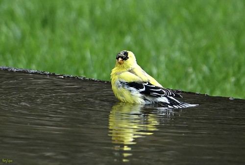 """Wet One • <a style=""""font-size:0.8em;"""" href=""""http://www.flickr.com/photos/52364684@N03/34454655051/"""" target=""""_blank"""">View on Flickr</a>"""