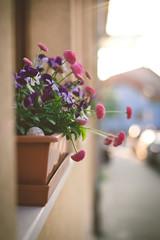 Come on in... (sue.konvalinkova) Tags: flowers violet bythewindow window box windowbox bokeh sunset depthoffield soft sticking onawalk nikon d750 enjoyeveryday simple everydaylife ordinarythings housedecor