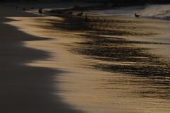 ... (alicia alondra) Tags: nikon d3200 beach playa chile atacama bahiacisne caldera 2017 summer verano colors ocean sea nature