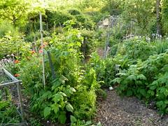 Where to walk... (hardworkinghippy : La Ferme de Sourrou) Tags: permaculture sourrou perigord
