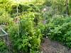 Where to walk... (hardworkinghippy : La Ferme de Sourrou) Tags: permaculture sourrou perigord potager legumes buttes jardin