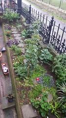 20170517_083951 (Carol B London) Tags: sgc flowers floral stepney stepneygreencourt stepneygreen e1 londone1 flowering bushes residentgarden gardens ids