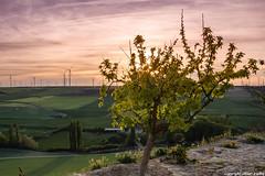 El arbol (cvielba) Tags: valladolid atardecer eolicos molinos peñaflordehornija puestadesol