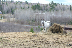 Pleasure (Cindy's Here) Tags: horse rural ontario canada canon warren 198365 explore