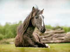 Wild Horse (Old Camera Effect) (C.A.Photogenics) Tags: light horse newforest colour contrast