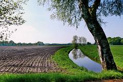 Acker mit Baum - Field with tree (antje whv) Tags: landschaft landscape norddeutschland graben ditch bäume trees acker field parallen parallels