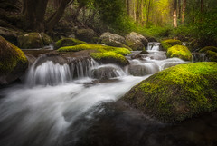 Sacred Forest Great Smoky Mountains National Park Scenic Cascade (johanhakanssonphotography) Tags: greatsmokymountainsnationalpark roaringforkmotornaturetrail waterscape water cascade rapid scenic beauty gatlinburg tennessee smokymountains nikon d800 1735mm nature southernappalachians sacred forest light glow colors polarizer johanhakanssonphotography print canvas woods outdoors landscape travel tranquility serenity native cherokee landscapephotographymagazine outdoorphotographymagazine hiking waders nationalpark nationalgeographic reallyrightstuff popularphotographymagazine