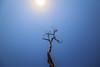 Feel the summer @ Rushikonda beach (vamsichennupalli) Tags: beach rushikondabeach vizag afternoon scenery tree sky sun bird