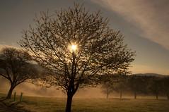 Frühnebel (Mariandl48) Tags: morgenstimmung sonnenaufgang kirschbaum sonne sonnenstrahlen wiese nebel landschaft sommersgut wenigzell steiermark austria frühnebel