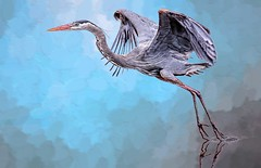 Beauty In Blue (Wes Iversen) Tags: ardeaherodias brighton kensingtonmetropark michigan milford tamron150600mm birds digitalart nature painterly waterbirds wildlife hss sliderssunday sunrays5