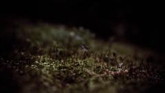 Mossy <3 (Ruadh Sionnach) Tags: moss mossy plant musgo nature natureza naturaleza macro paganism folk pagan