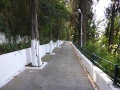 Προς την Παναγία Τρυπητή-Αίγιο  P1010891 (amalia_mar) Tags: green white trees path aigioachaiagreece παναγίατρυπητή πράσινο λευκό δέντρα μονοπατι αίγιοαχαϊαελλάδα