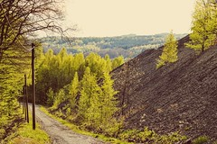 (winterprinzessin89) Tags: nature way weg natur photography photo photographie fotografie photografie forest tree outdoors nikon d3200 dslr spring frühling green