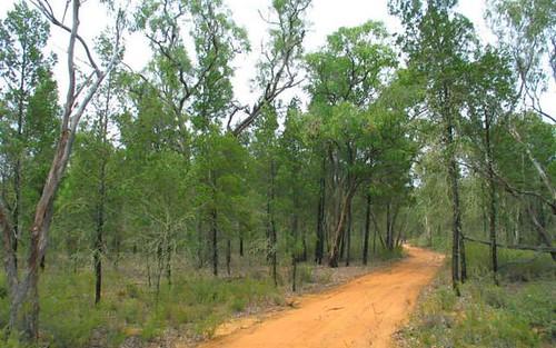 41 Baan Baa Road, Baan Baa NSW 2390