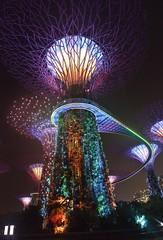 Super Tree (St./L) Tags: nikon night attraction color red green violet imaginative creative tree supertree design show harmony art singapore
