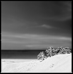 born in the sand (ukke2011) Tags: hasselblad503cw sonnar1504cf rolleirpx25 selfdeveloping rodinal film pellicola 6x6 square 120 bw mediumformat