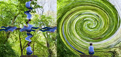 Self-distortion / world-distortion (shenamt) Tags: abstract twist twirl circle world geometry geometric square carre checkers trees outdoor green spring summer leaves perceptionofself worldperception mindfulness wave spherize distortion distort week182017 52weeksthe2017edition weekstartingsundayapril302017 spiral fibonacci nature