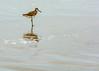 c_pearce-February 28, 2016-055.jpg (flinthillsphoto) Tags: water seabirds beach texas portaransas sand gulfofmexico birds portarthur seabird shorebird padreisland