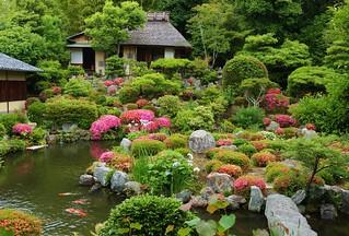 Azalea Garden /  Kyoto Toji- in temple 京都 等持院