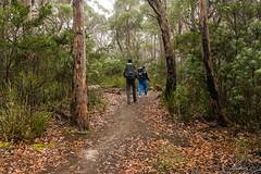 A bit misty (NettyA) Tags: 2017 3capestrack australia sonya7r tasmannationalpark tasmanpeninsula tasmania tassie threecapestrack bushwalking hike hiking track trail path trees misty bushwalkers hikers