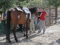 Mundo del caballo-Carrera de cintas-Alameda (Málaga) (lameato feliz) Tags: alameda caballo muchacho deporte jinete