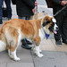 Faces of London: lucky dog in Mayfair