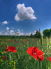 A funny ghost (Robyn Hooz (away)) Tags: funny ghost nuvola cloud poppies papaveri campo field grass weed padova cielo sky blue
