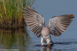 Water landing....