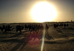 Follow me into the desert, as thirsty as you are (6079 Jones, P) Tags: compactcamera 2004 ripples sand flare sun landscape trek trail camels sunset travel africa tunisia desert sahara firstdigitalcamera c2 olympus holiday vacation