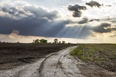 A Giant Light Modifier (SteveFrazierPhotography.com) Tags: rural countryside country field agriculture farm farmland farming scene scenery landscape clouds rays beams sunlight sun flowers yellow beautiful stevefrazierphotography plowed gravel road cloudy overcast illinois nature