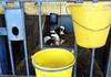 pawu026 (Otwarte Klatki) Tags: krowa krowy mleko zwierzęta cielak ferma andrzej skowron