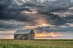 Good Morning (David DeCamp) Tags: rural farm agriculture nature barn field sky clould sunrise corn scenics prairie blue