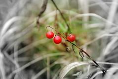 DSC_3456 (Dmitry Mahahurov) Tags: russia россия махахуров mahahurov nature природа родина